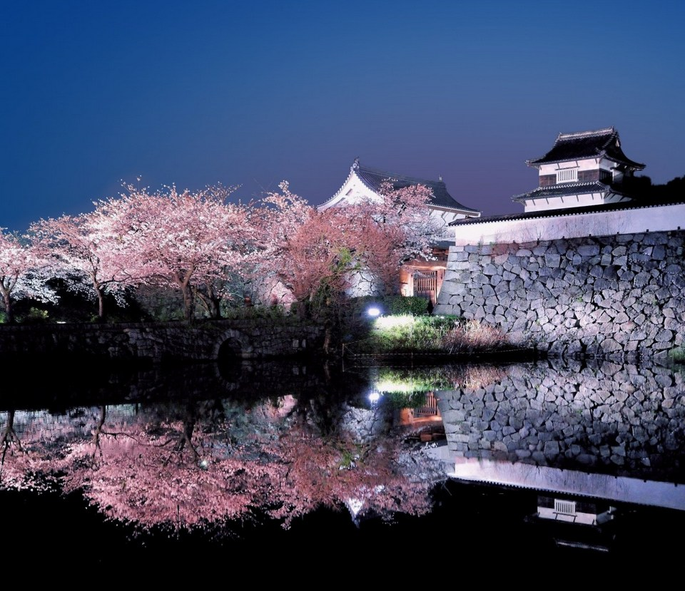 Fukuoka Castle Sakura Festival at night