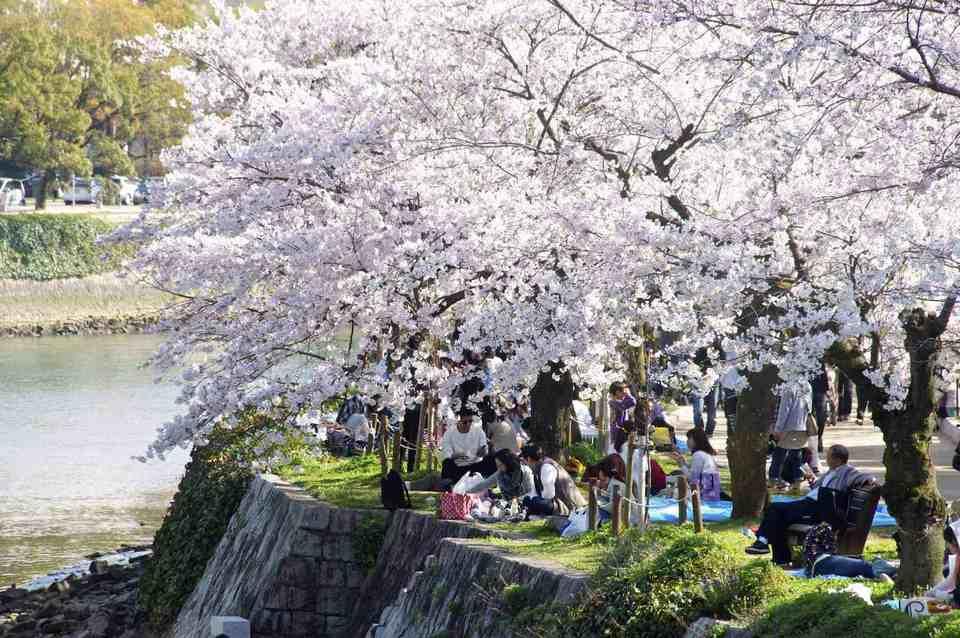 Hiroshima Peace Memorial Park cherry blossom