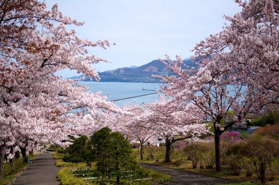 Hokkaido Best cherry blossom-viewing spot