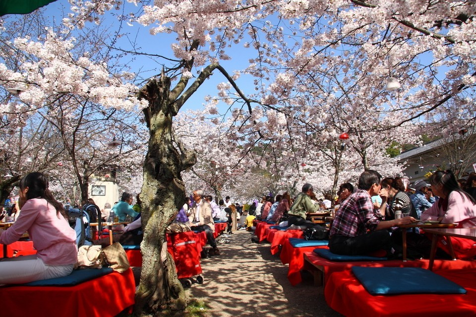 Maruyama Park. Kyoto