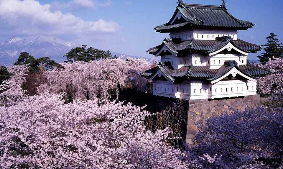 isit Hirosaki in Aomori Prefecture, one of the best spots for cherry blossoms in Japan