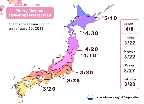 japan cherry blossom 2019 forecast by regions