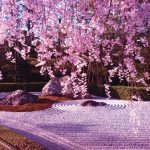 Cherry blossom forecast 2019 Japan — The dates & top 10 best places to see cherry blossoms in Japan