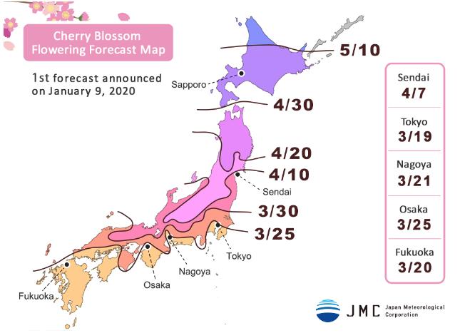 Japan Cherry Blossom 2020 Forecast Living Nomads Travel Tips Guides News Information