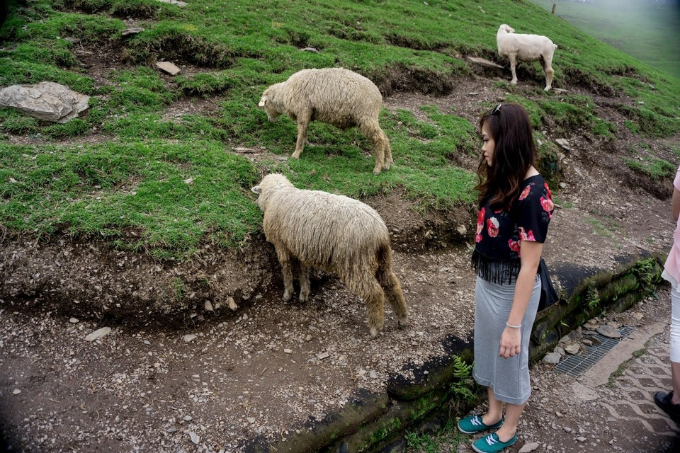 Tourist can feed the sheep in Qingjing Farm