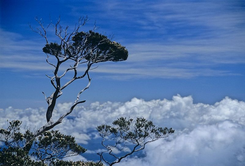 Kinabalu-7 unforgettable experiences on the Borneo Island3