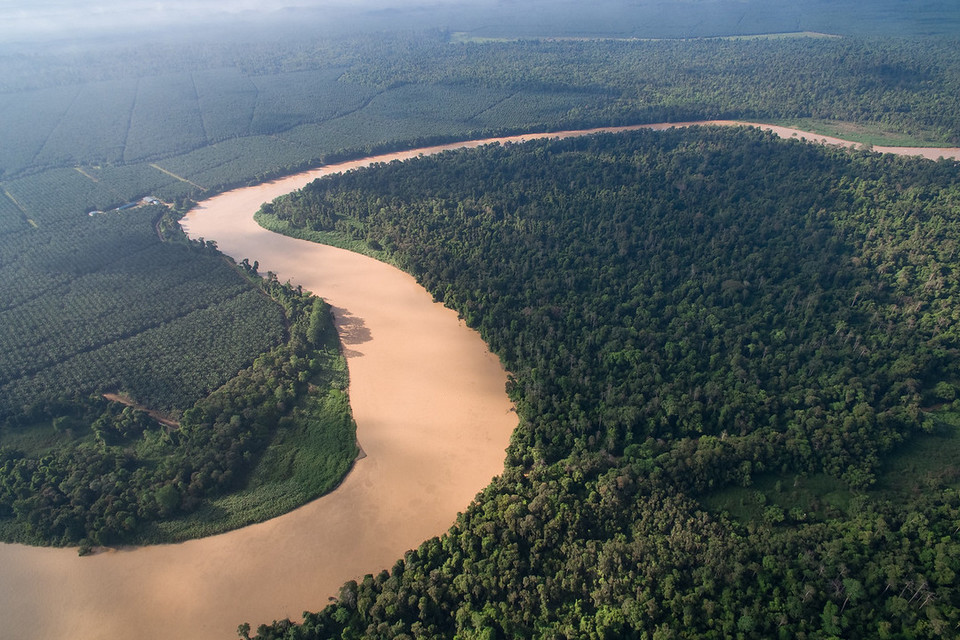 kinabatangan river-7 unforgettable experiences on the Borneo Island9