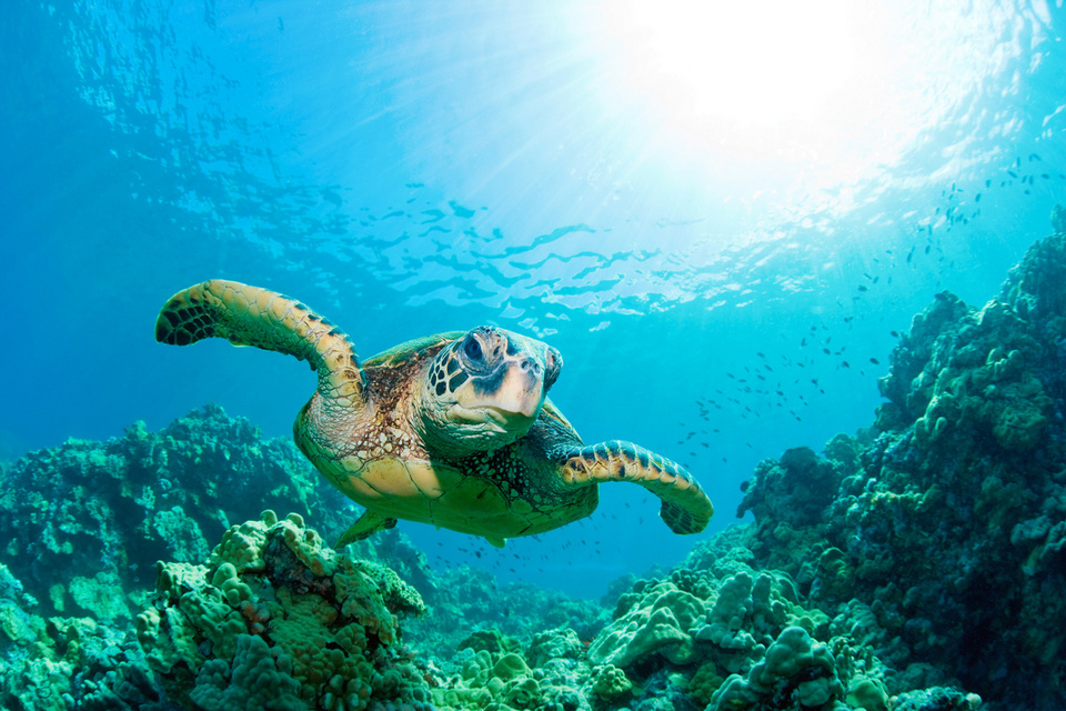 turtles in Sipadan-7 unforgettable experiences on the Borneo Island