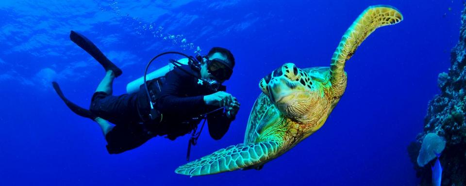 turtles in Sipadan-7 unforgettable experiences on the Borneo Island4