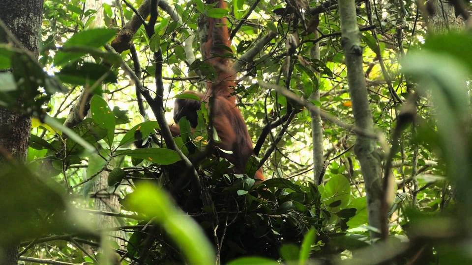 monkeys-boreno-malaysia1