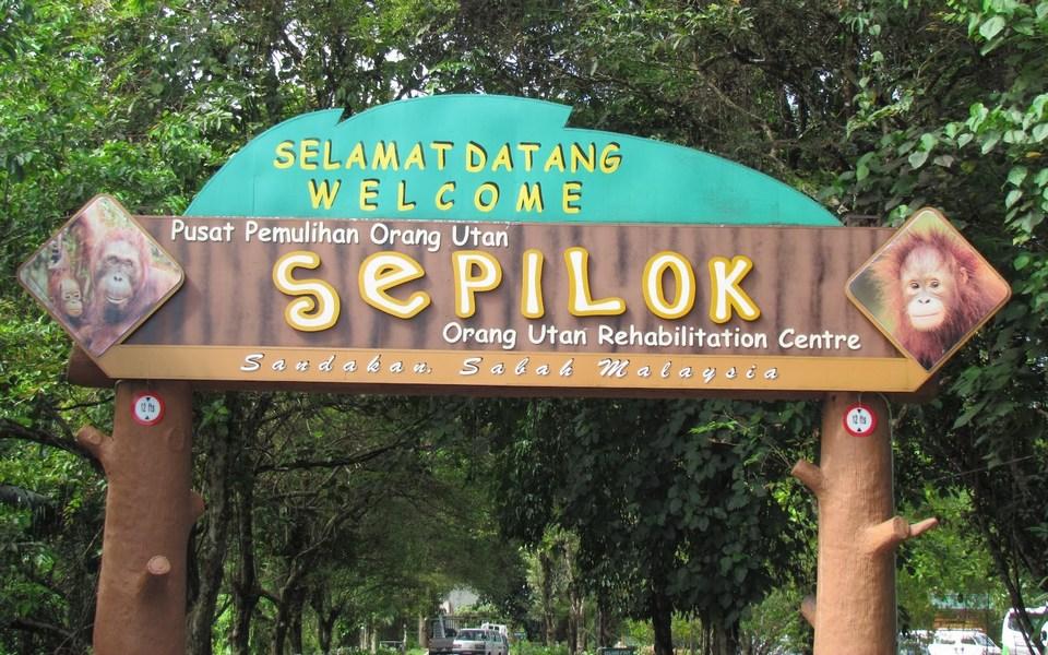 monkeys-boreno-malaysia11