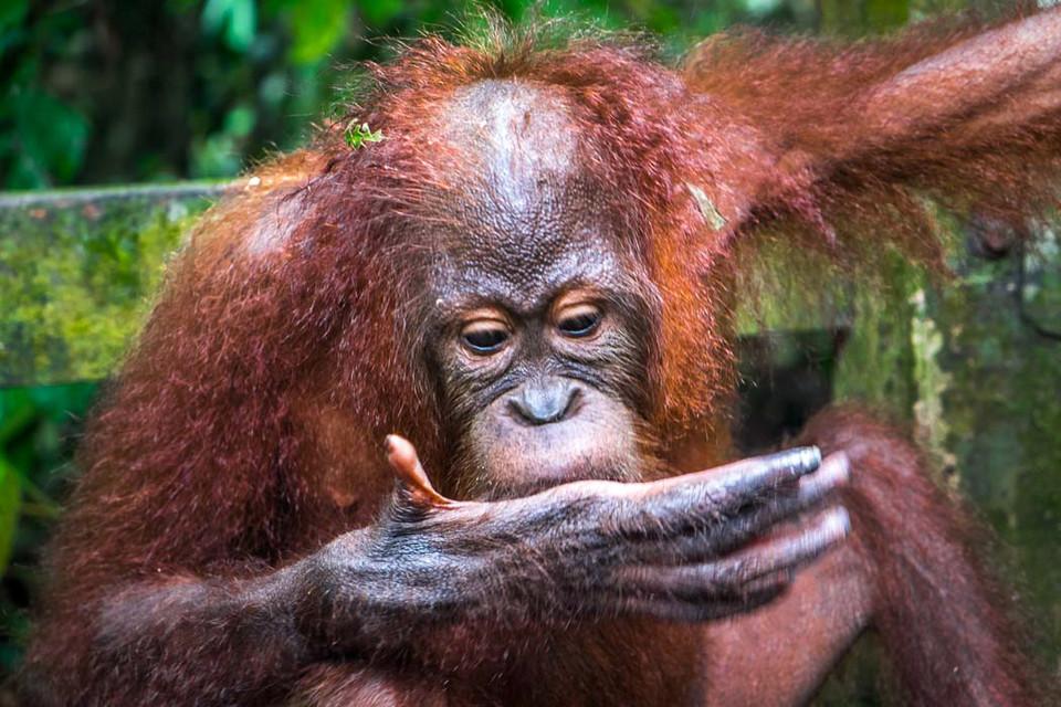 monkeys-boreno-malaysia12