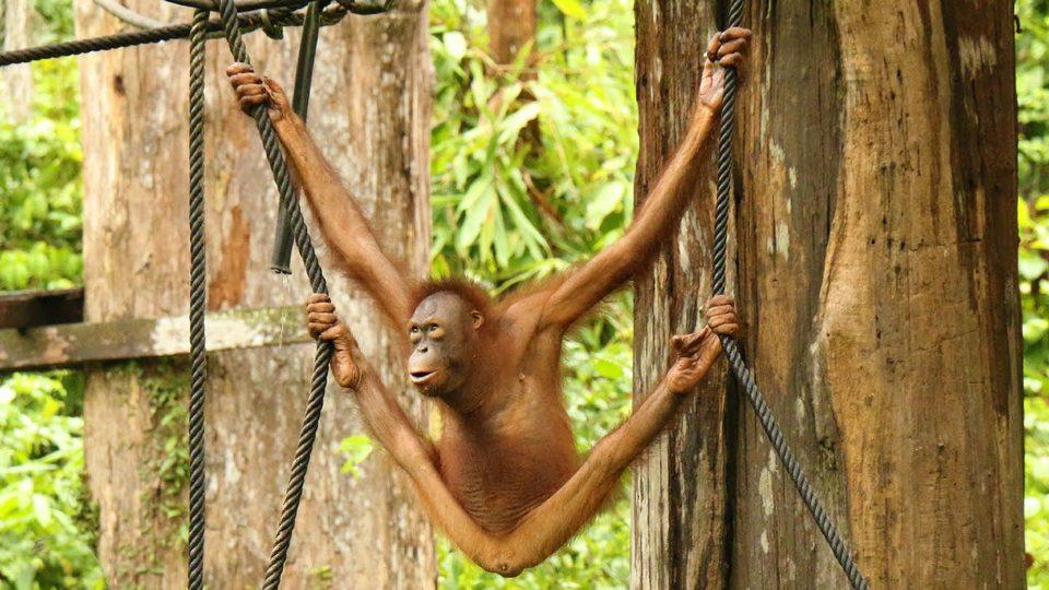 monkeys-boreno-malaysia2