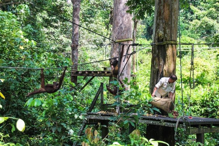 monkeys-boreno-malaysia3