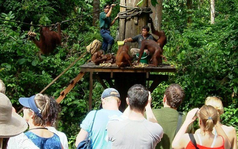monkeys-boreno-malaysia6