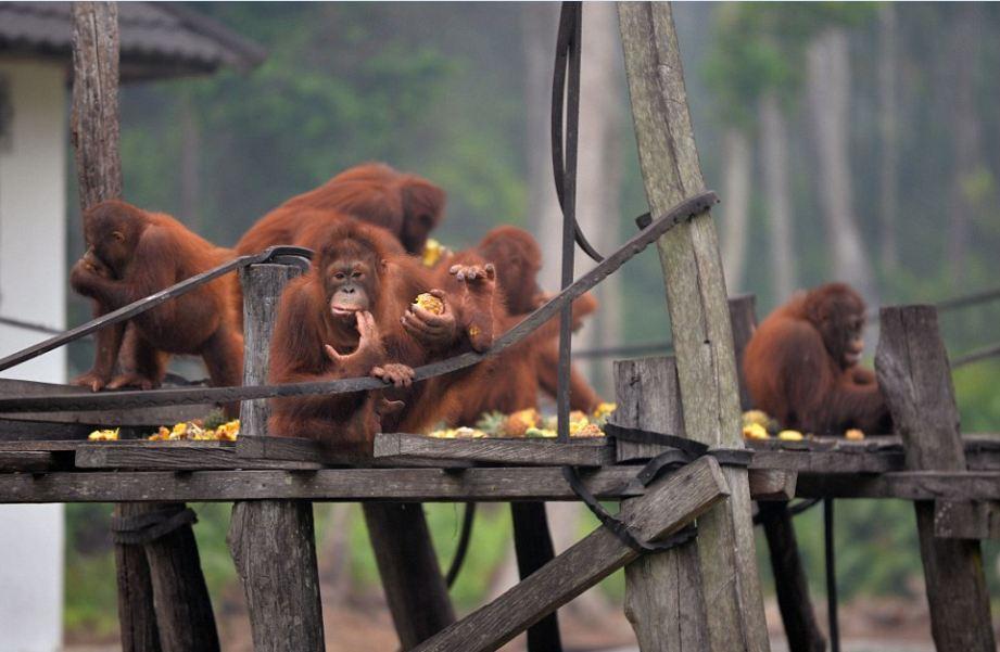 monkeys-boreno-malaysia8