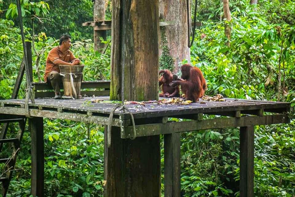 monkeys-boreno-malaysia9
