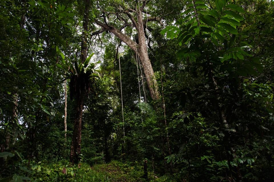 penan people-borneo-malaysia1