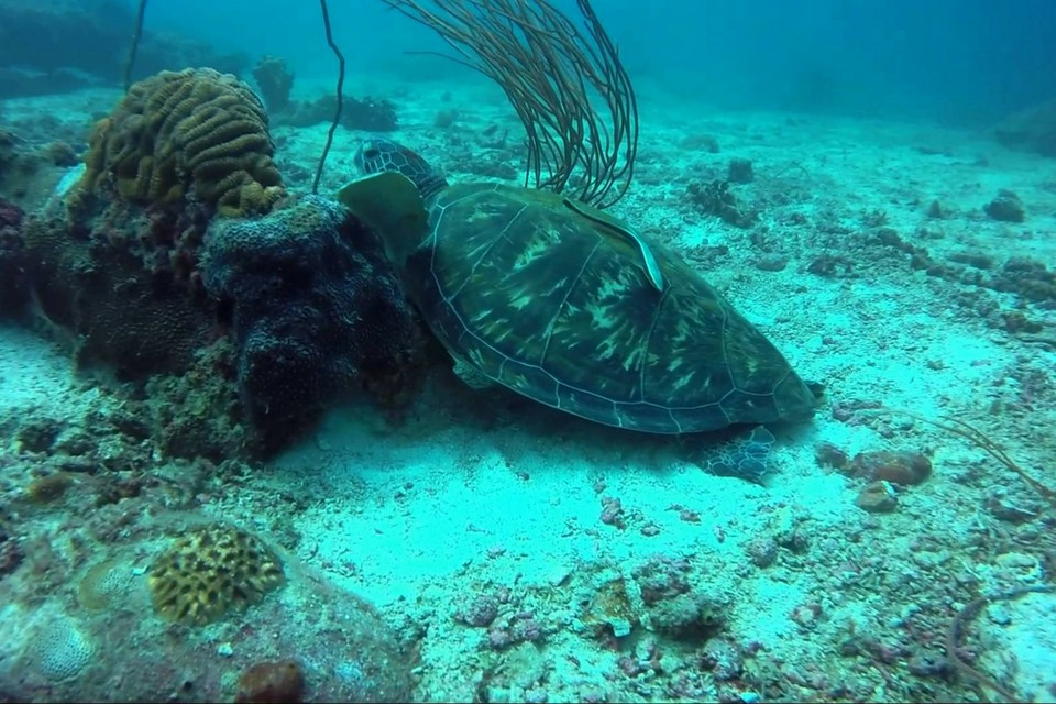 Aur Island Snorkelling Tour Package top islands in malaysia best islands in malaysia malaysia beach holiday destinations