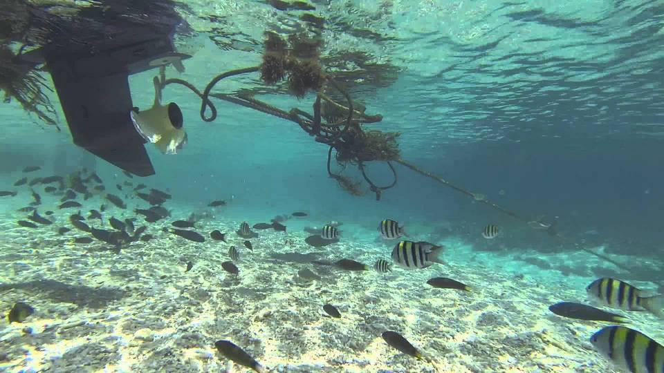 Rawa island snorkeling