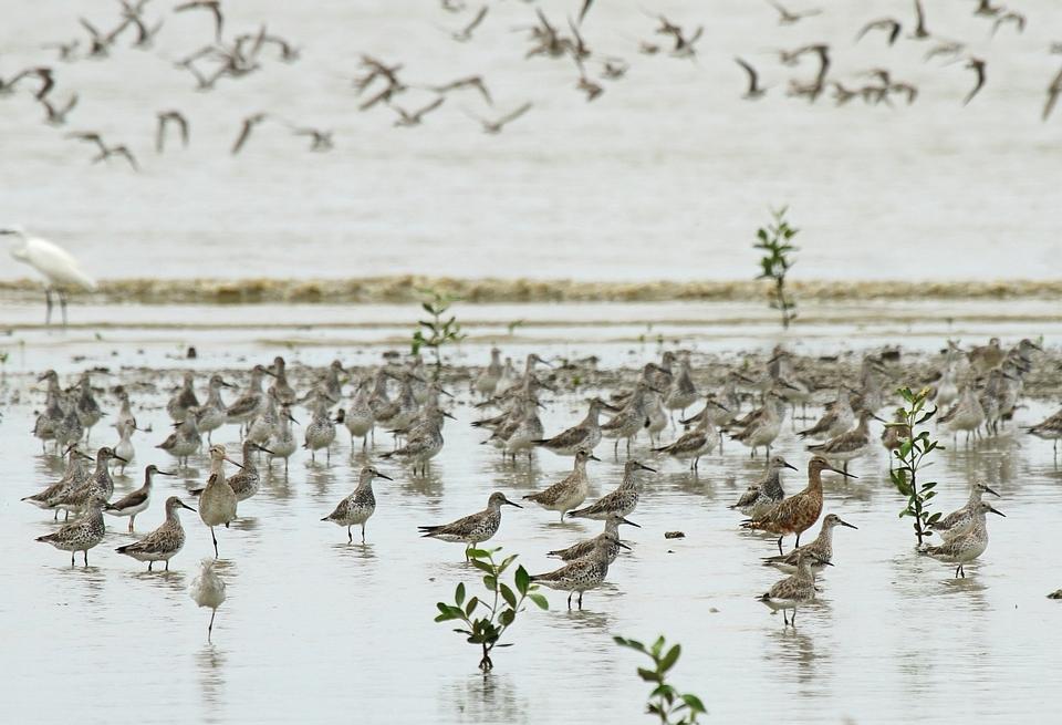 Waders Teluk Air Tawar