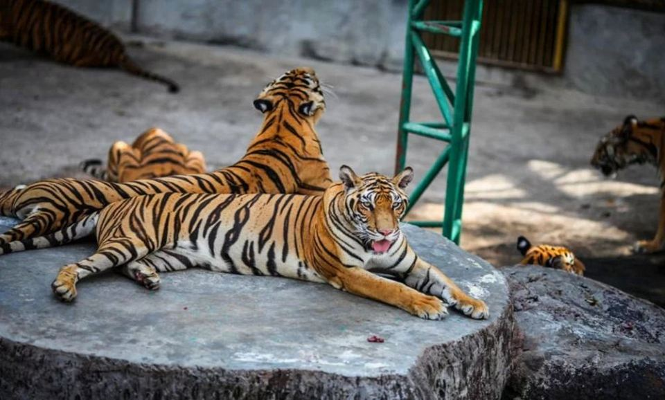 Sriracha Tiger Zoo - lord of forest-thailand33