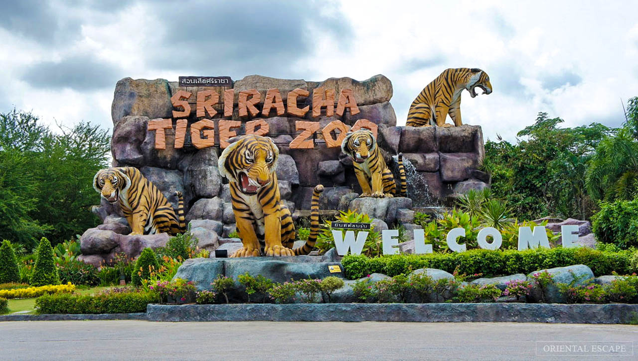 sriracha tiger zoo pattaya review (1)