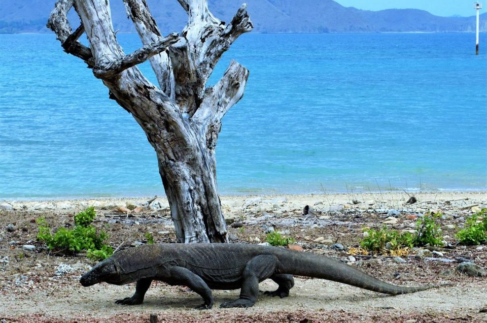 Komodo-most beautiful islands in Southeast Asia11