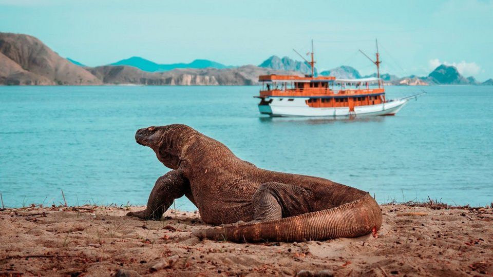 Komodo-most beautiful islands in Southeast Asia2