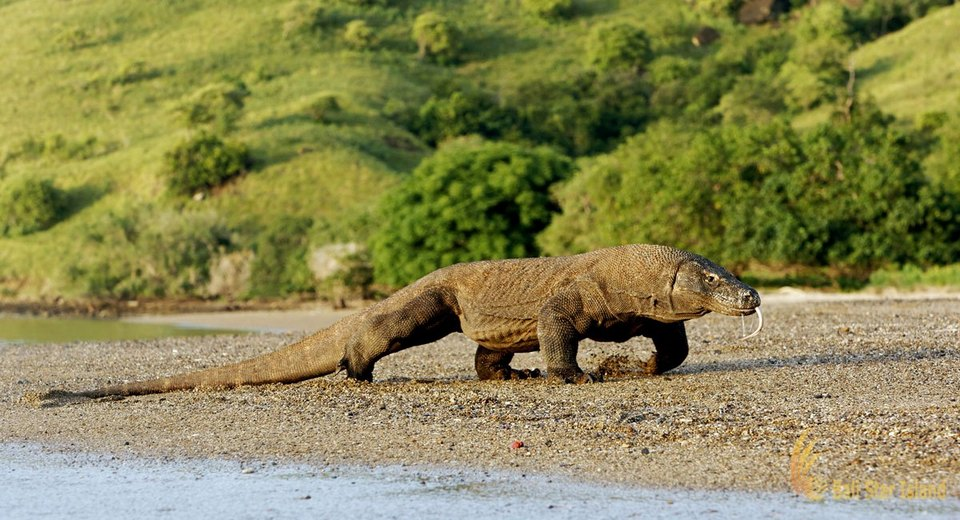Komodo-most beautiful islands in Southeast Asia8