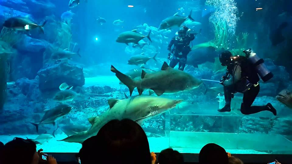 Sea Life Aquarium, Busan