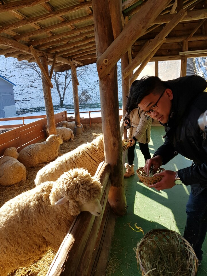 the most beautiful sheep farm in Gangwon - Korea11