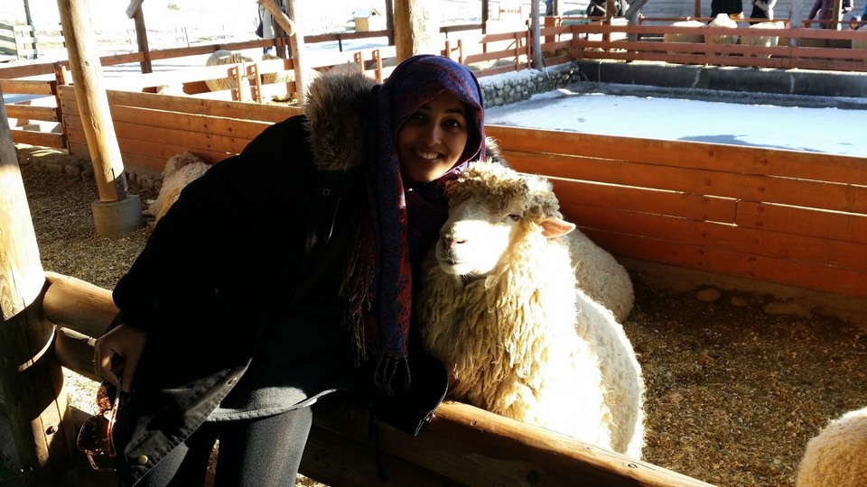 the most beautiful sheep farm in Gangwon - Korea14