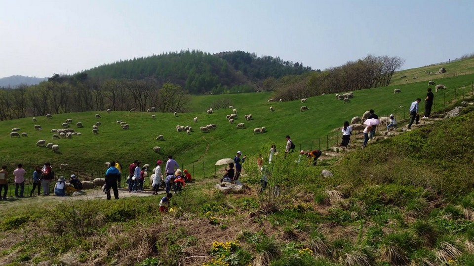 the most beautiful sheep farm in Gangwon - Korea24