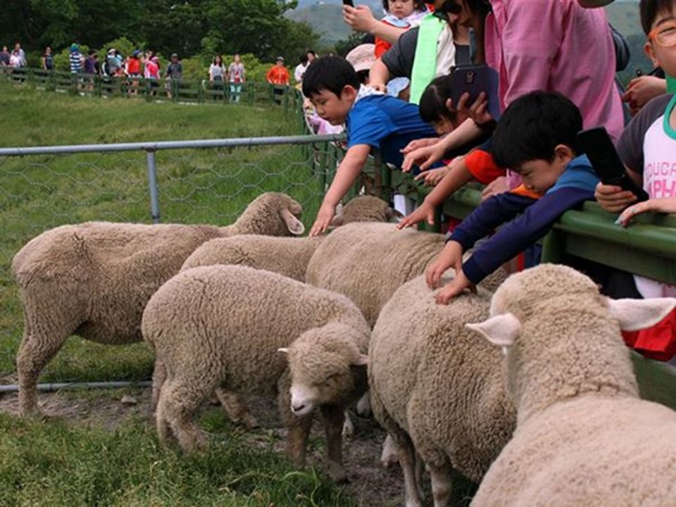 the most beautiful sheep farm in Gangwon - Korea25