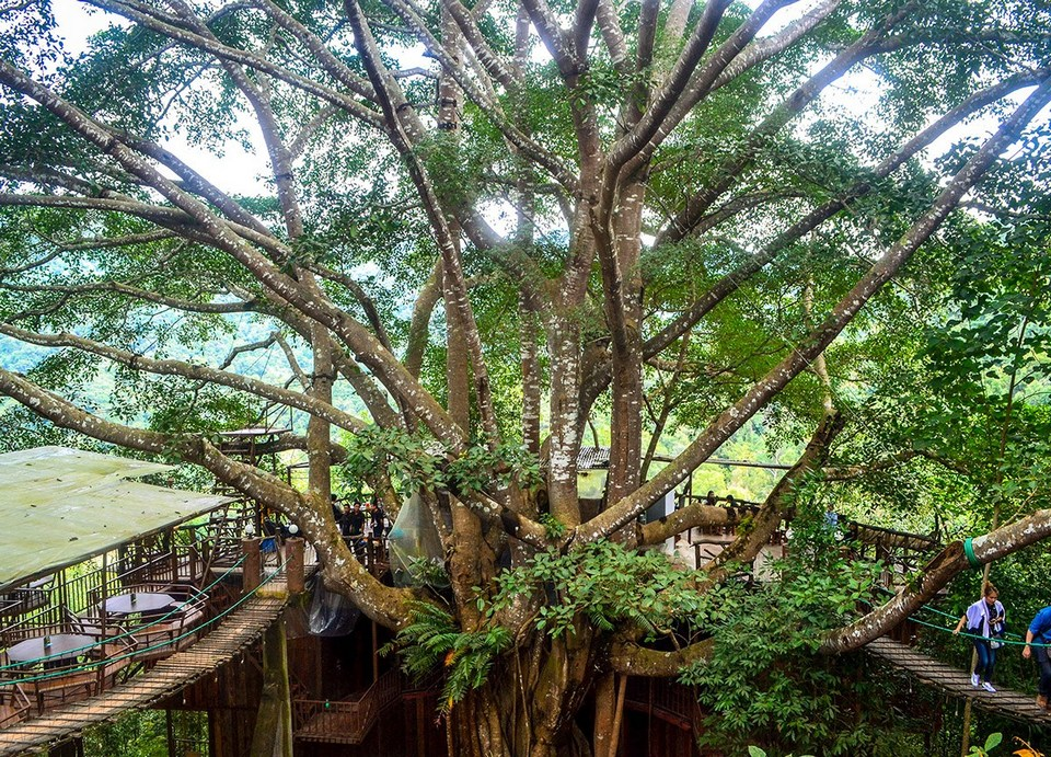 Giant-Tree-House-Coffee-Shop-in-Chiang-Mai-Homestay-5
