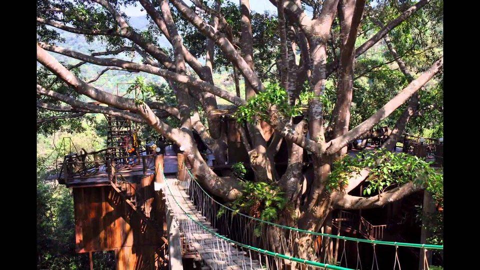 The Giant Chiangmai thailand (1)