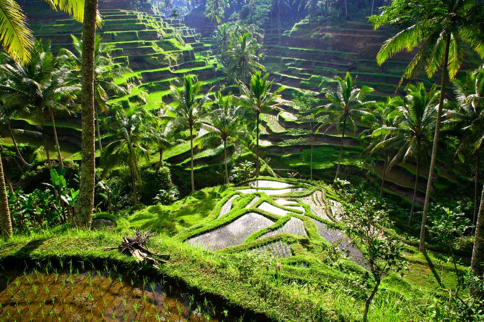 Ubud-places to stay when coming to bali for the first time1