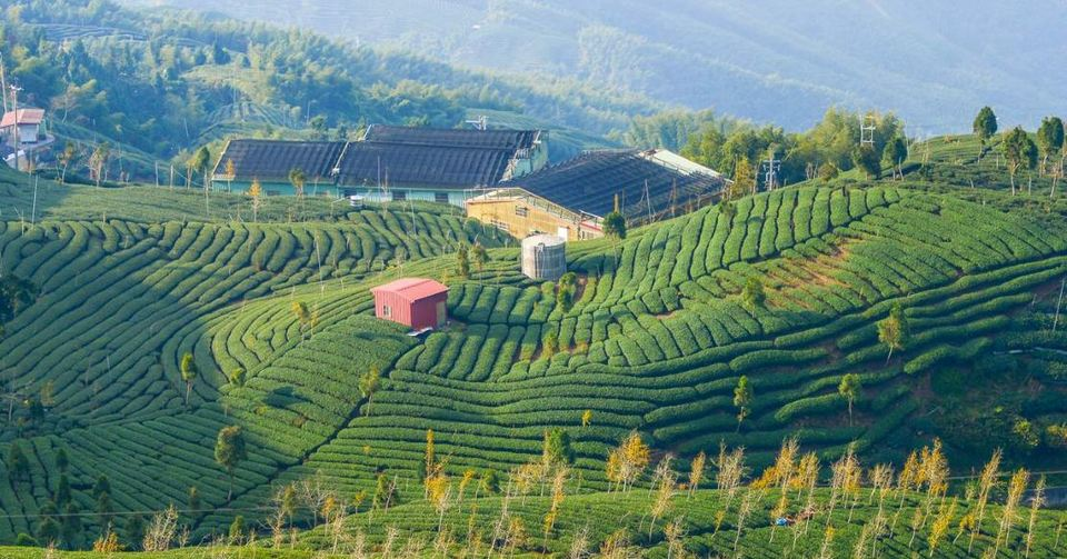 Ba Gua Tea Garden-Shiding Thousand Island Lake-Taipei City2