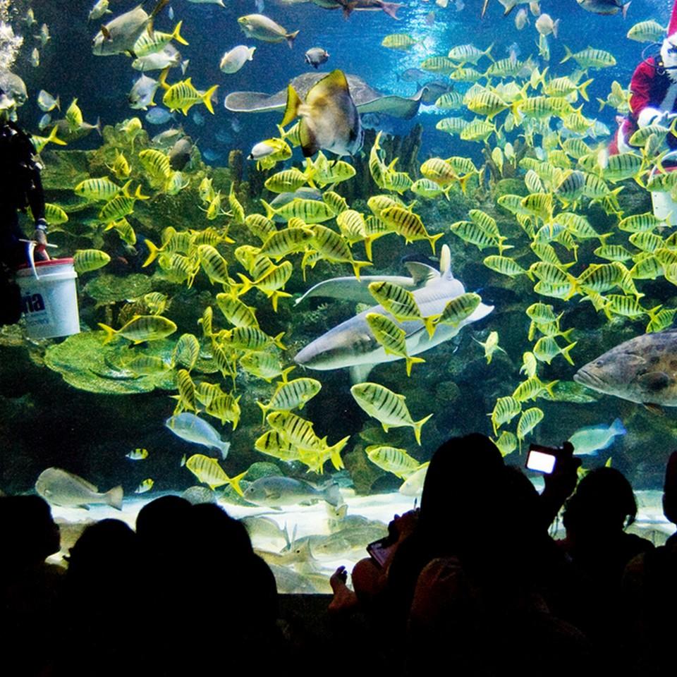 Aquaria Aquarium-kuala lumpur