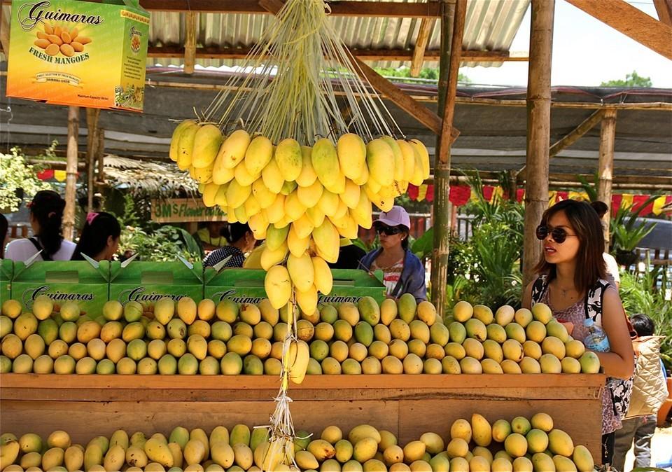 Mango and products of mango-iloili-philipine5