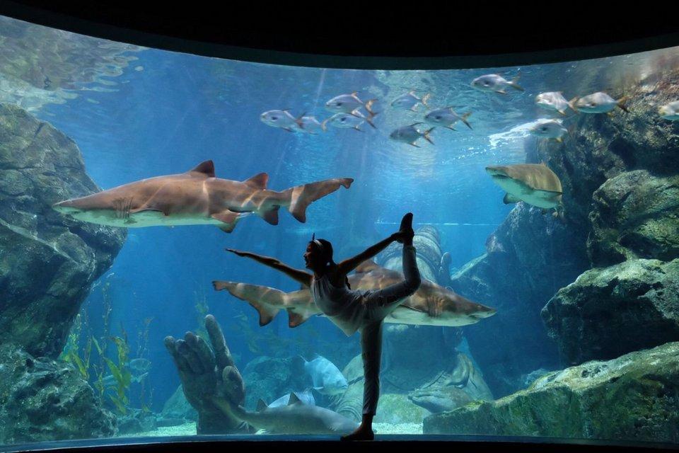 SEA Life Aquariums Bangkok-bangkok-thailand