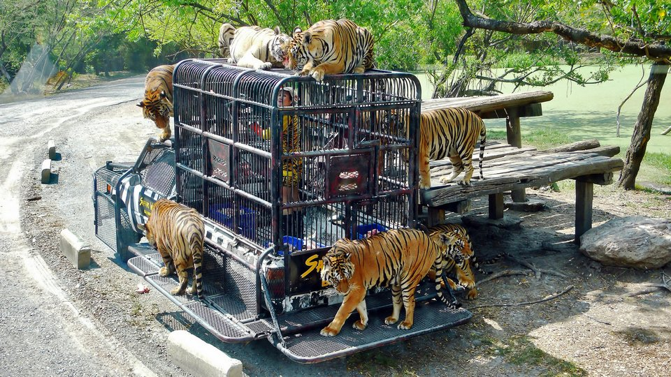 Safari World Bangkok-bangkok-thailand4