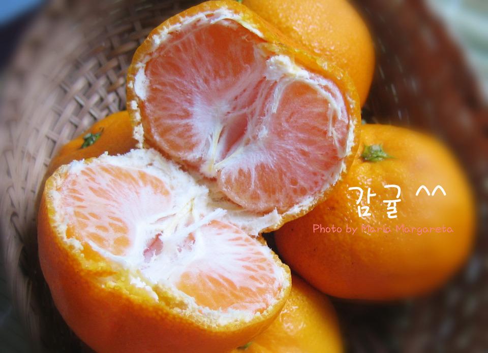 jeju tangerin farm2