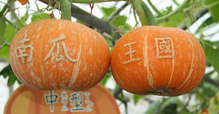 Wanshun Leisure Farm yilan