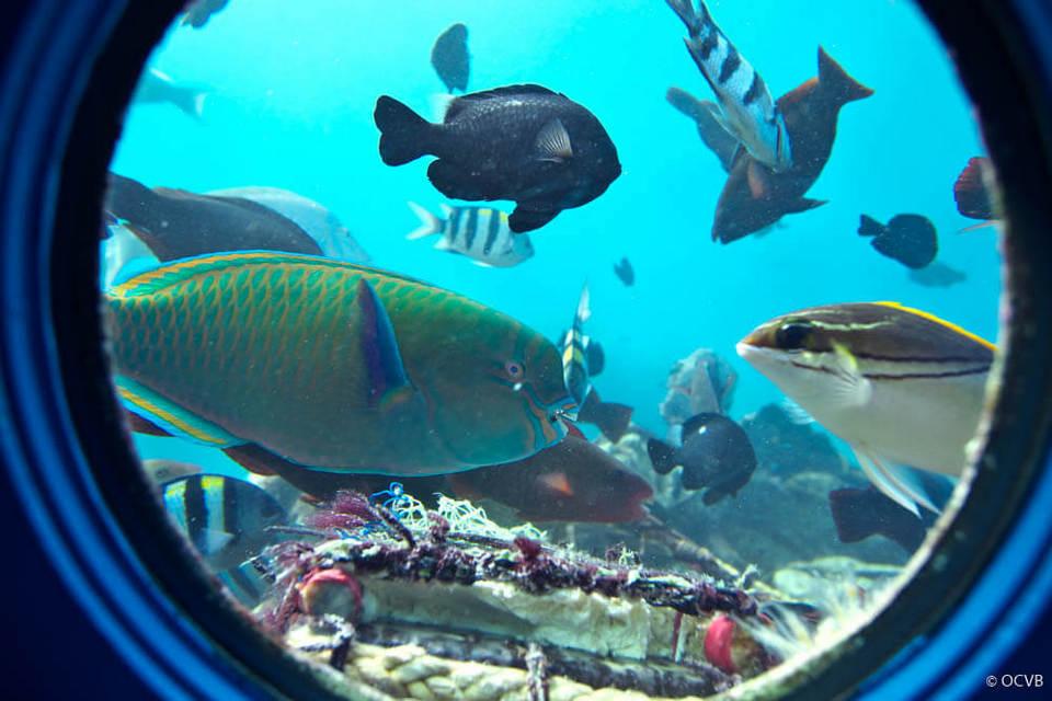 Busena Marine Park showing marine life and interior views