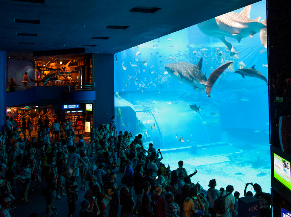 Okinawa Churaumi Aquarium Credit image: Okinawa travel blog.