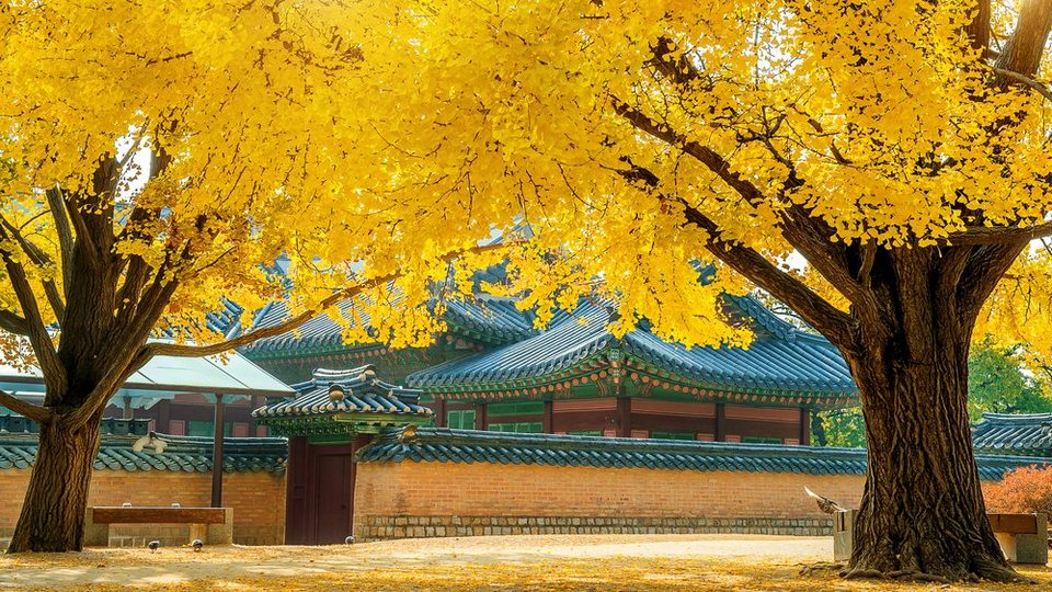 seoul in autumn