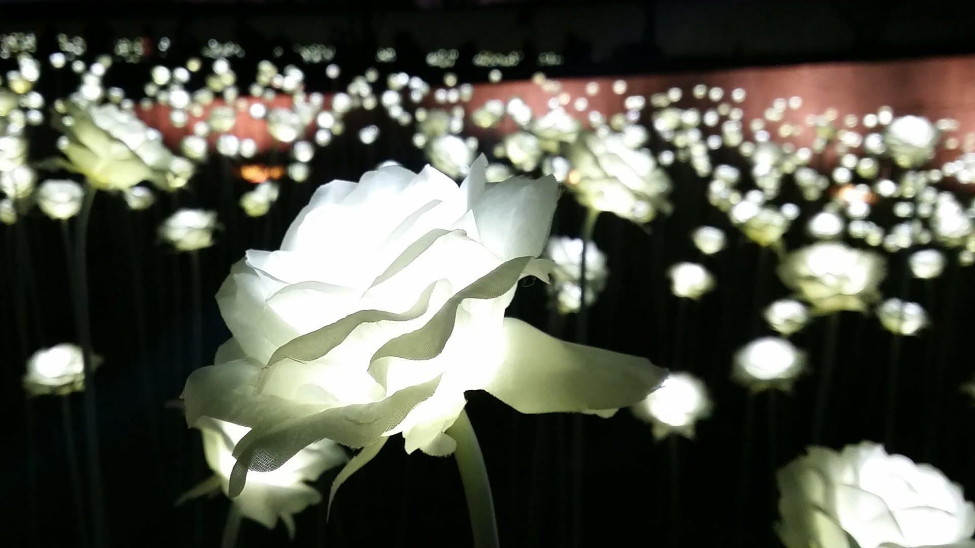 led rose garden3