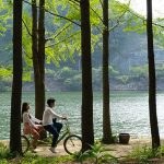 Nami Island travel blog — The fullest Nami Island travel guide for a great trip to Nami Island for the first-timers